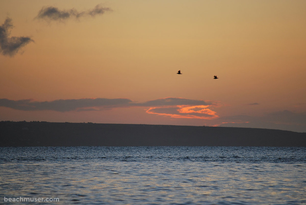 Mousehole sunrise with birds