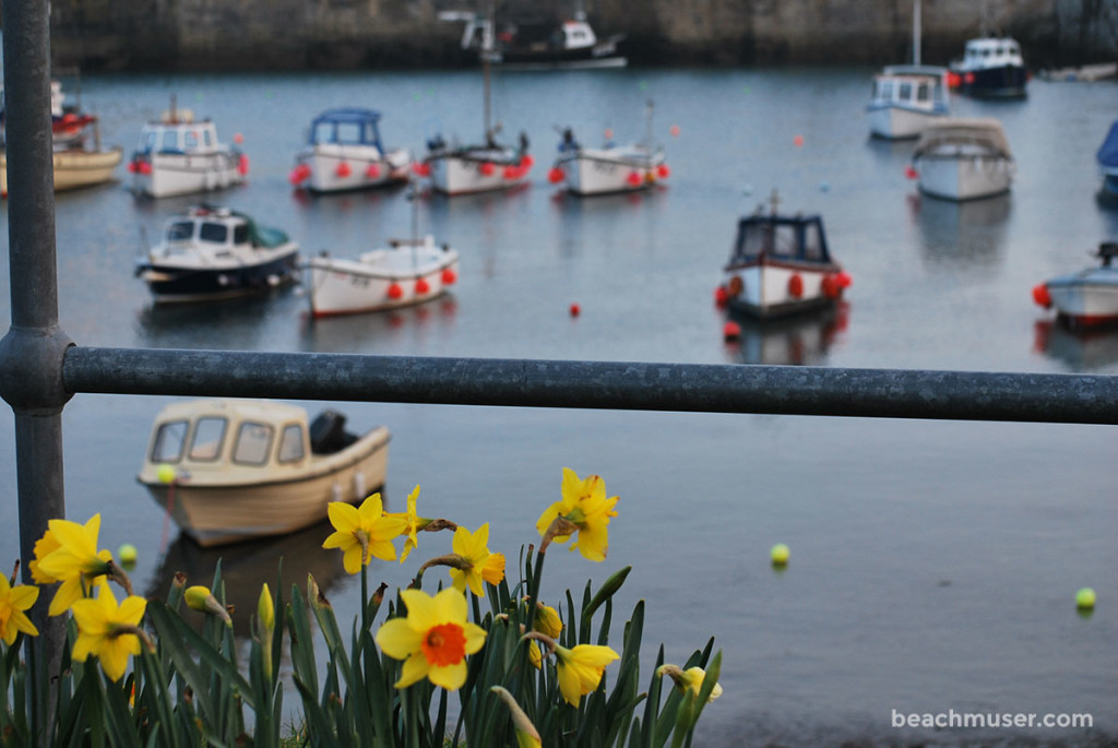 Porthleven Harbour Daffodils and Boats
