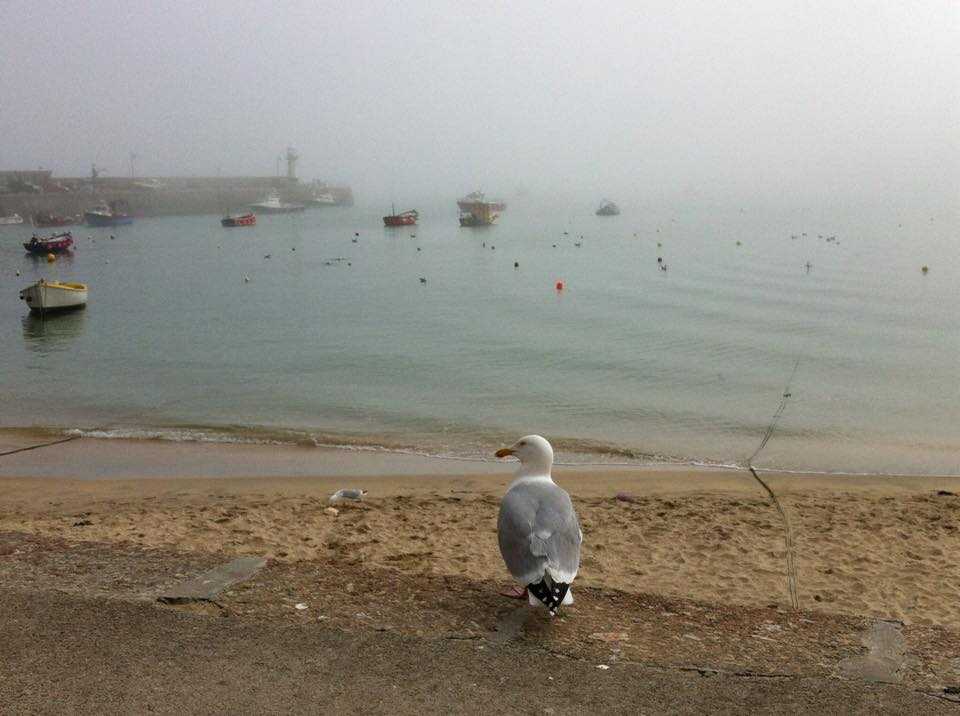 Seagull looking out to a foggy harbour