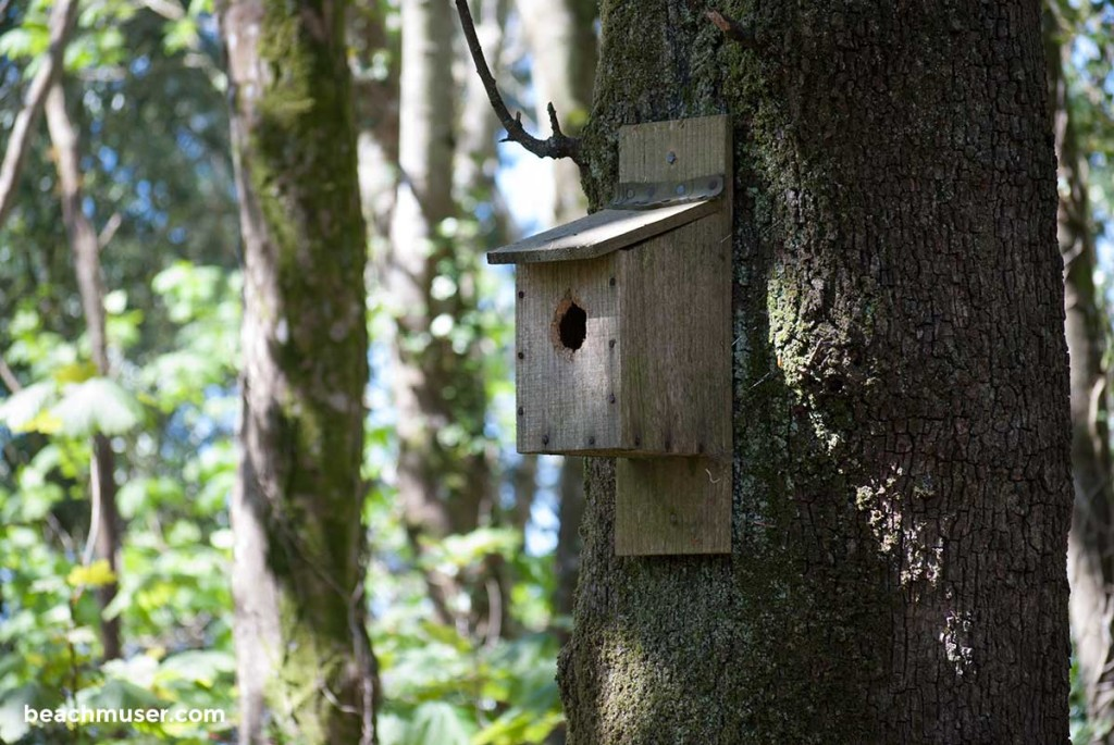 heligan-gardens-bird-box-left-web