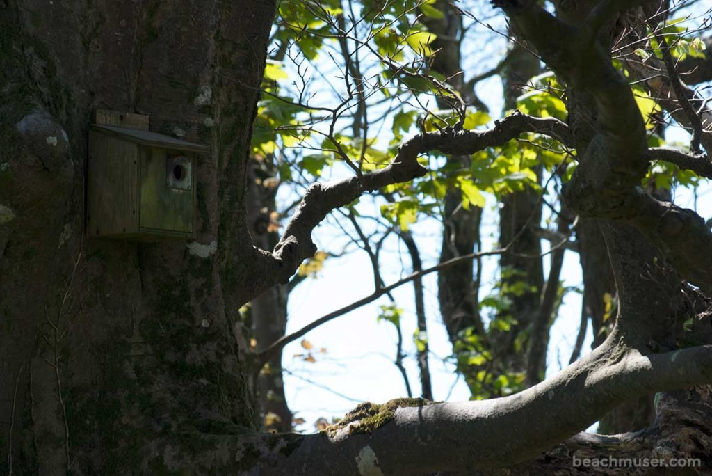 heligan-gardens-bird-box-right-web