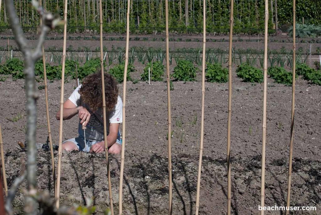 Heligan Gardens Gardener